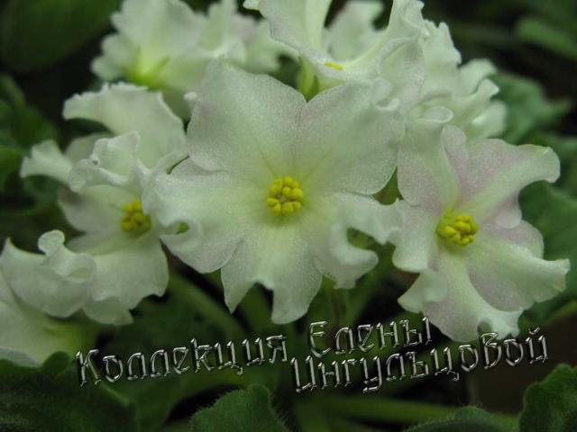 http://fialka.kharkov.ua/sites/default/files/imagecache/fialka-640-480/fialka/5/golden-autumn-2010-1.jpg